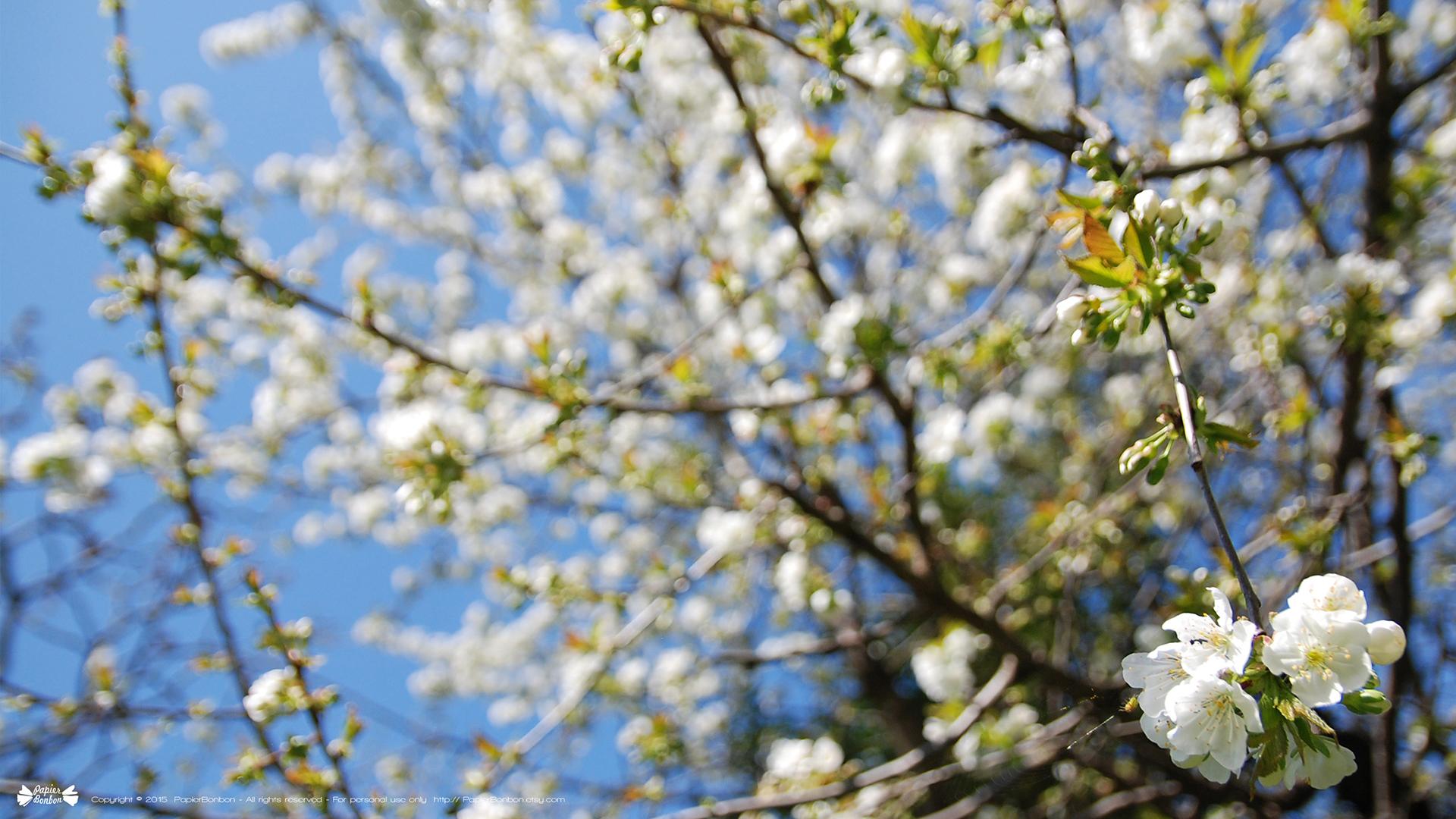 14 sunny desktop wallpapers - Springtime desktop wallpapers - Papier Bonbon