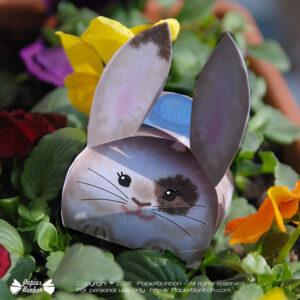 Boîte lapin - Bunny gift box